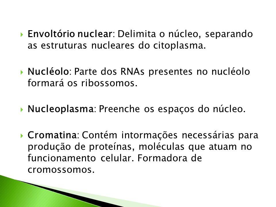 Envoltório nuclear: Delimita o núcleo, separando as estruturas nucleares do citoplasma.