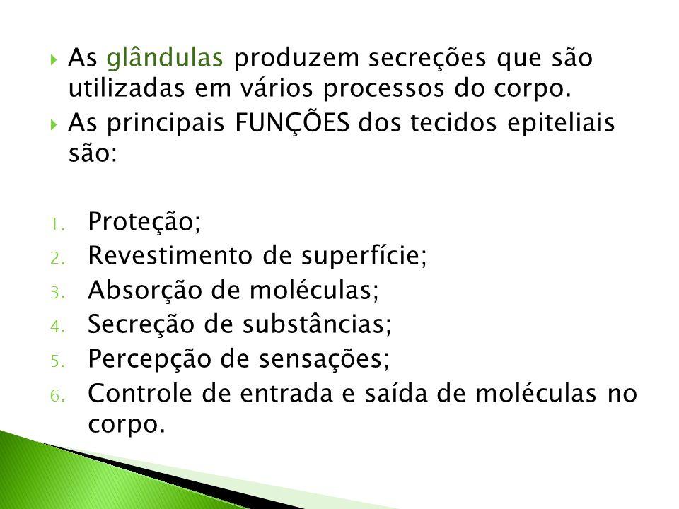 As glândulas produzem secreções que são utilizadas em vários processos do corpo.