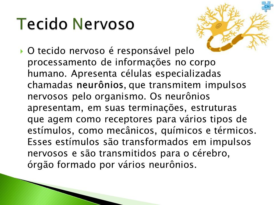 Tecido Nervoso