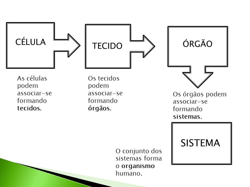 SISTEMA CÉLULA ÓRGÃO TECIDO