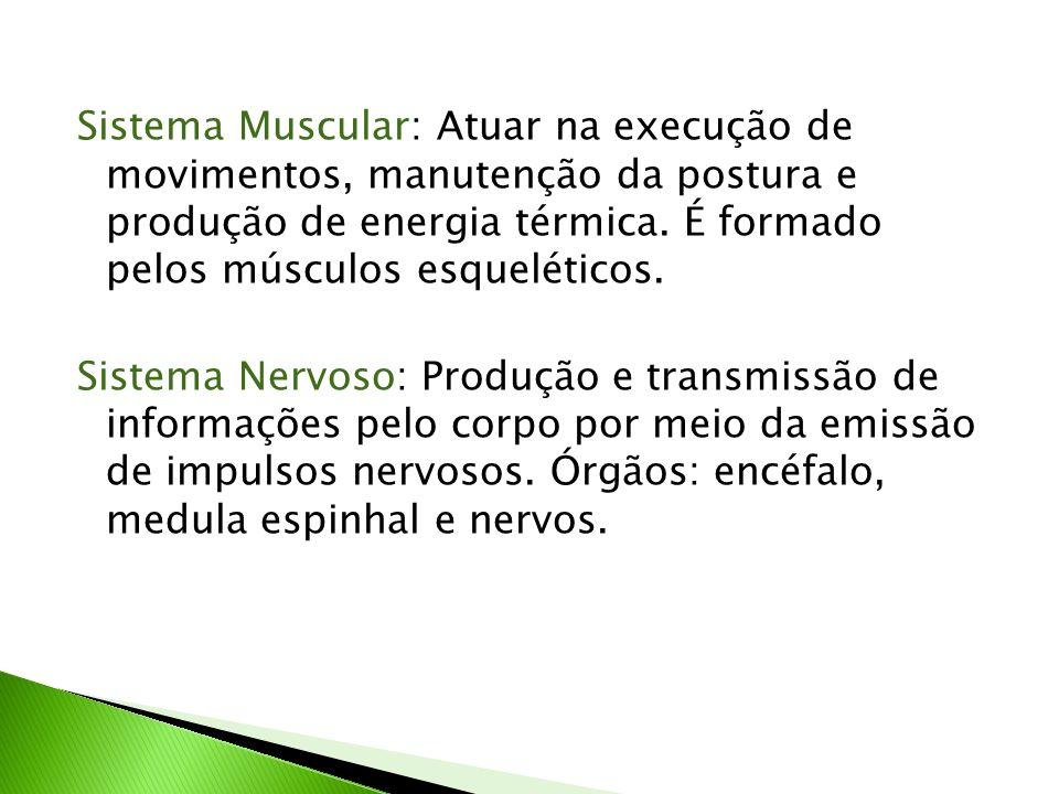 Sistema Muscular: Atuar na execução de movimentos, manutenção da postura e produção de energia térmica.