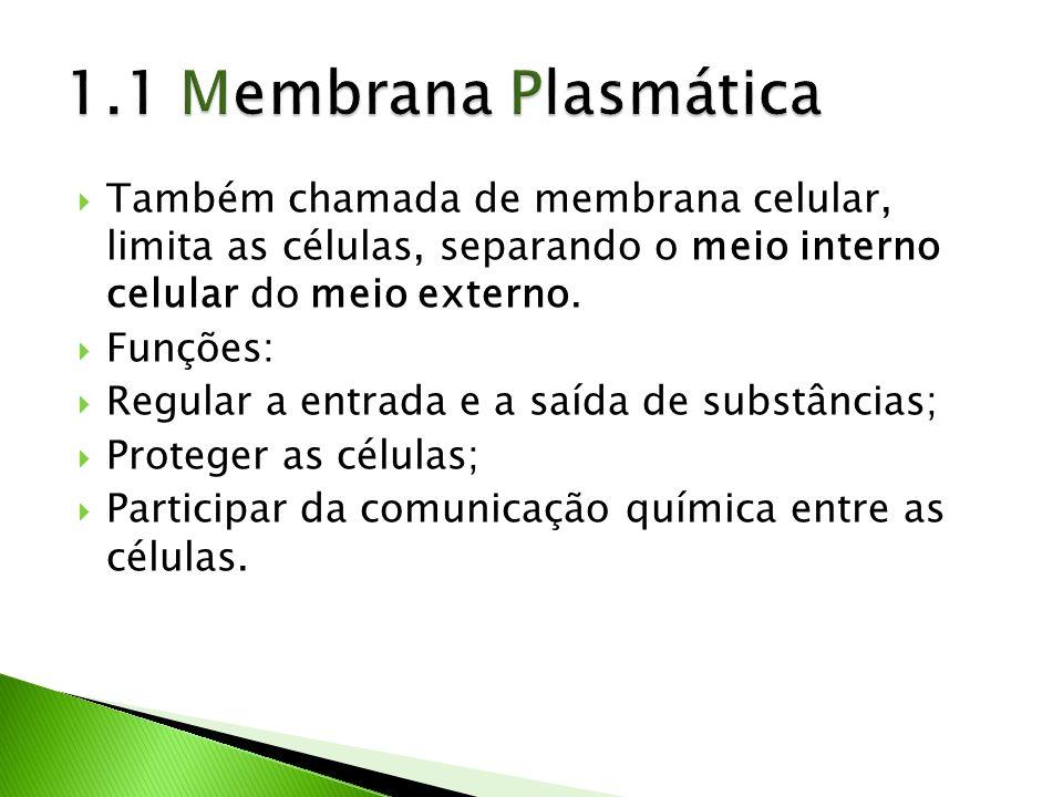 1.1 Membrana Plasmática Também chamada de membrana celular, limita as células, separando o meio interno celular do meio externo.