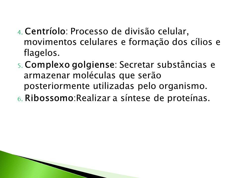 4. Centríolo: Processo de divisão celular, movimentos celulares e formação dos cílios e flagelos.