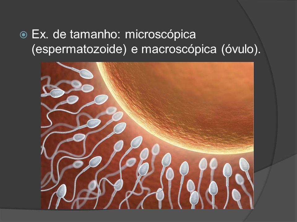 Ex. de tamanho: microscópica (espermatozoide) e macroscópica (óvulo).