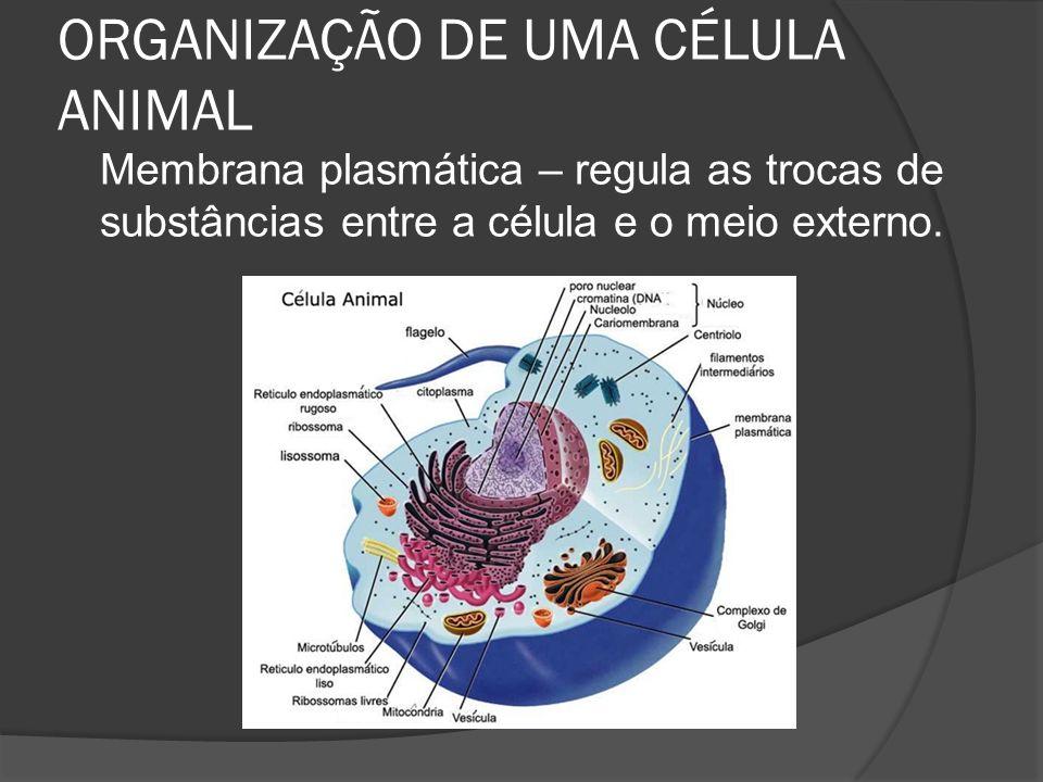 ORGANIZAÇÃO DE UMA CÉLULA ANIMAL