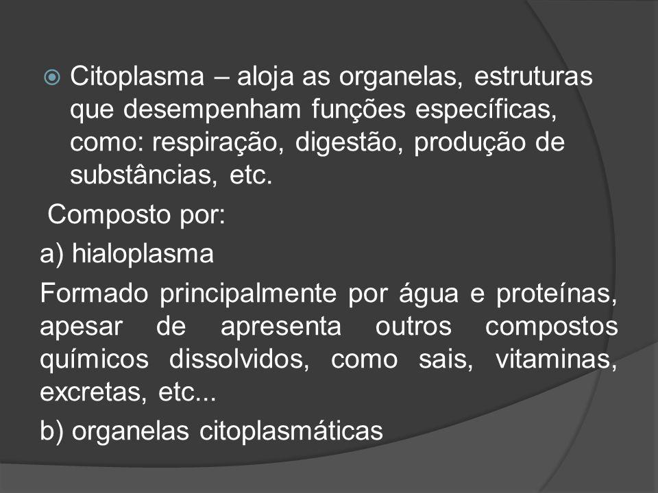 Citoplasma – aloja as organelas, estruturas que desempenham funções específicas, como: respiração, digestão, produção de substâncias, etc.
