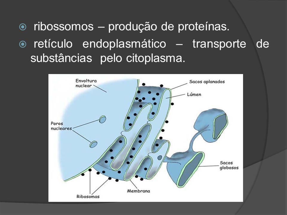 ribossomos – produção de proteínas.