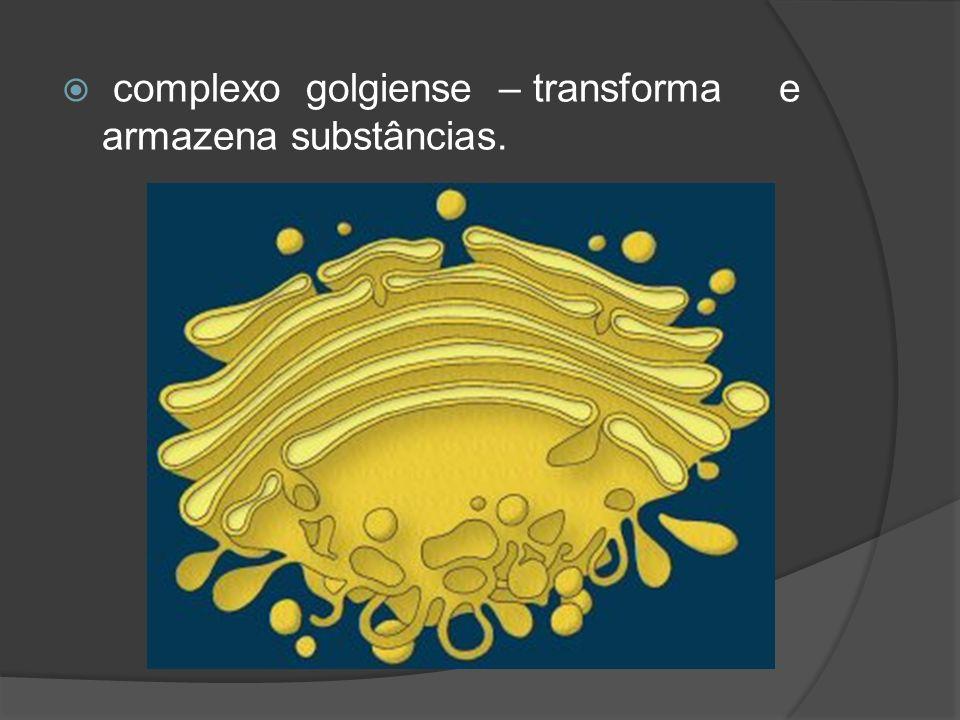 complexo golgiense – transforma e armazena substâncias.