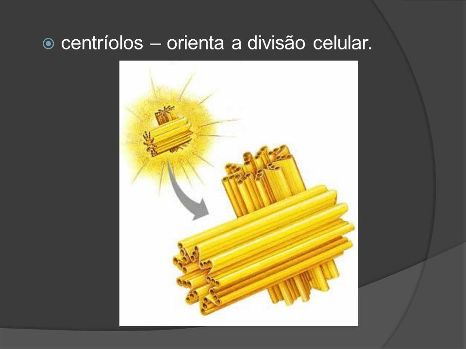 centríolos – orienta a divisão celular.