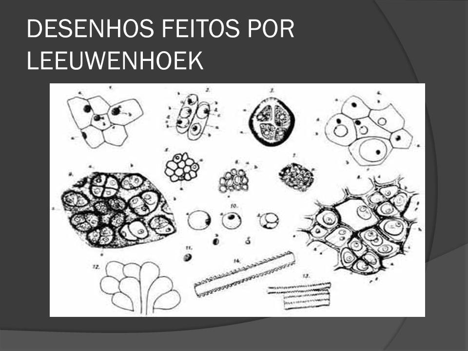 DESENHOS FEITOS POR LEEUWENHOEK