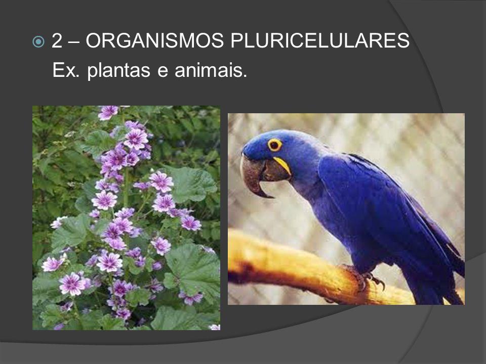 2 – ORGANISMOS PLURICELULARES