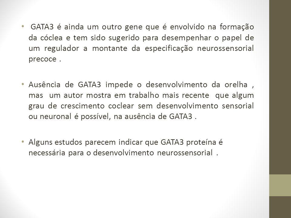 GATA3 é ainda um outro gene que é envolvido na formação da cóclea e tem sido sugerido para desempenhar o papel de um regulador a montante da especificação neurossensorial precoce .