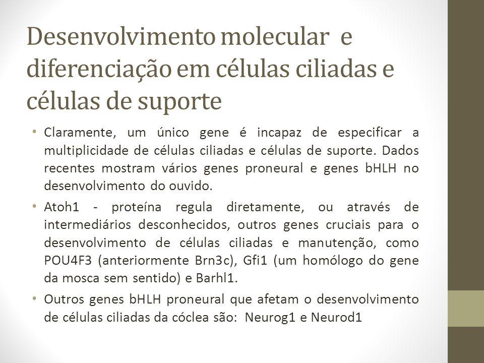 Desenvolvimento molecular e diferenciação em células ciliadas e células de suporte