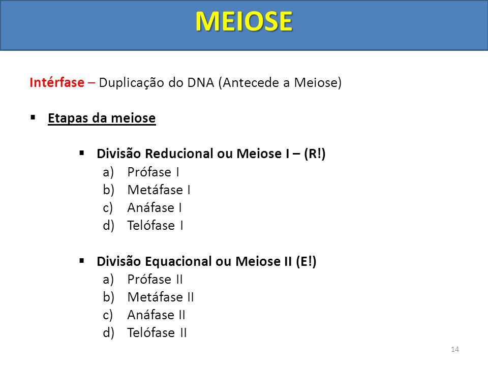 MEIOSE Intérfase – Duplicação do DNA (Antecede a Meiose)
