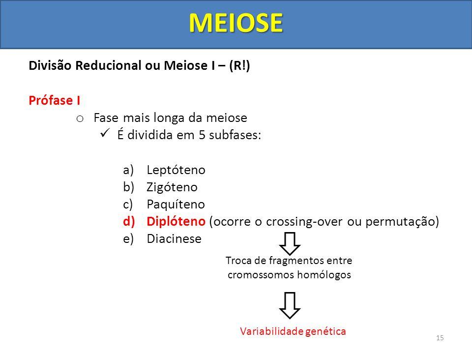 MEIOSE Divisão Reducional ou Meiose I – (R!) Prófase I