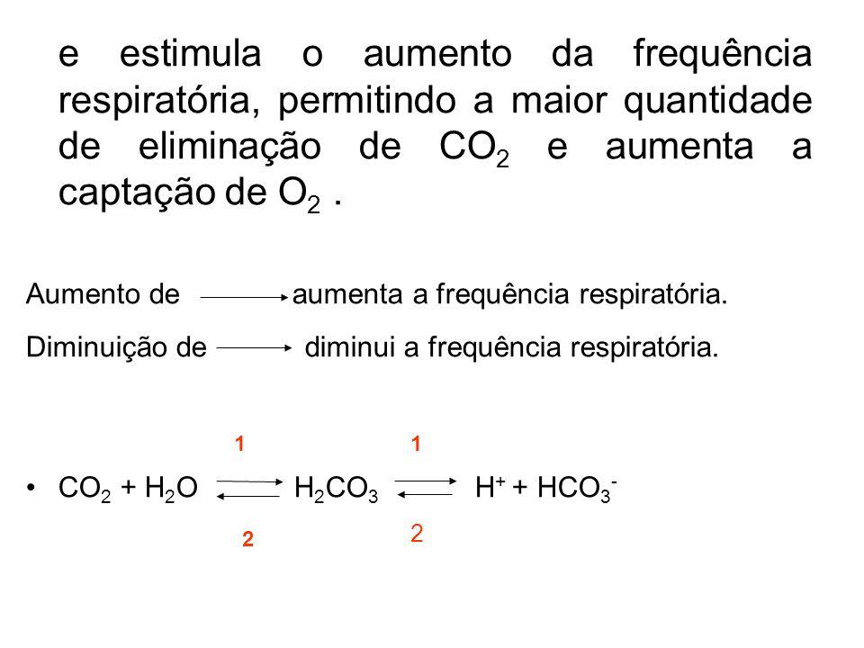 e estimula o aumento da frequência respiratória, permitindo a maior quantidade de eliminação de CO2 e aumenta a captação de O2 .