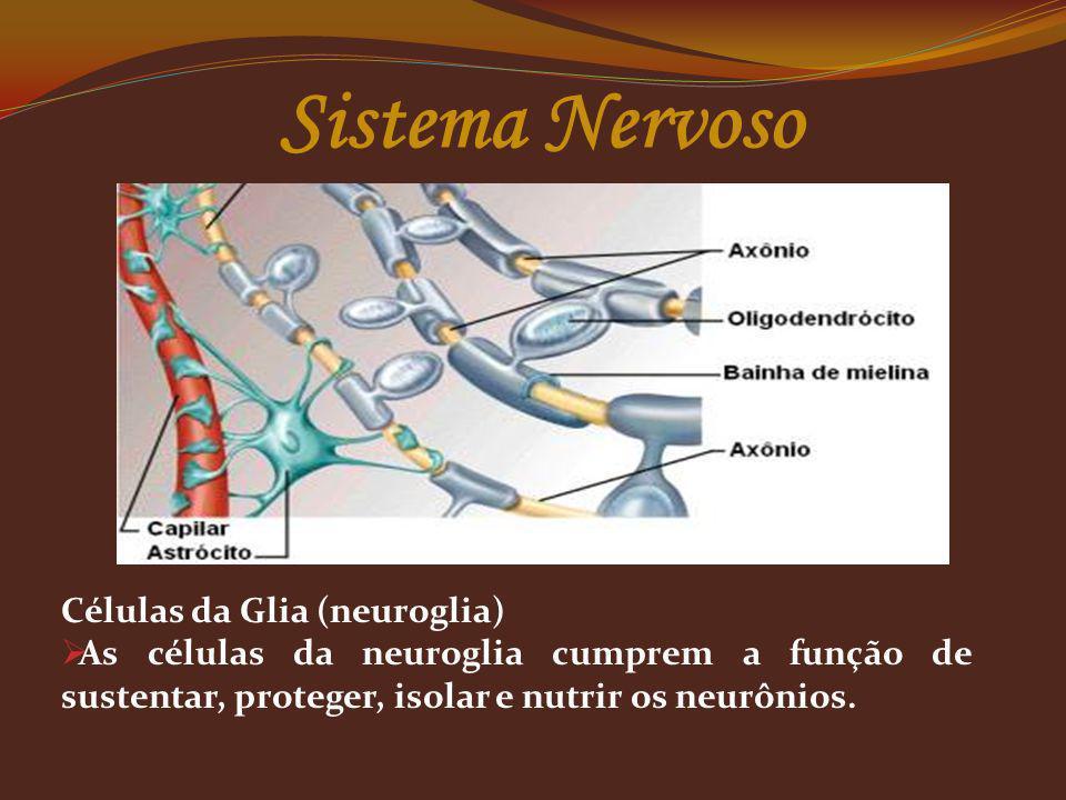 Sistema Nervoso Células da Glia (neuroglia)