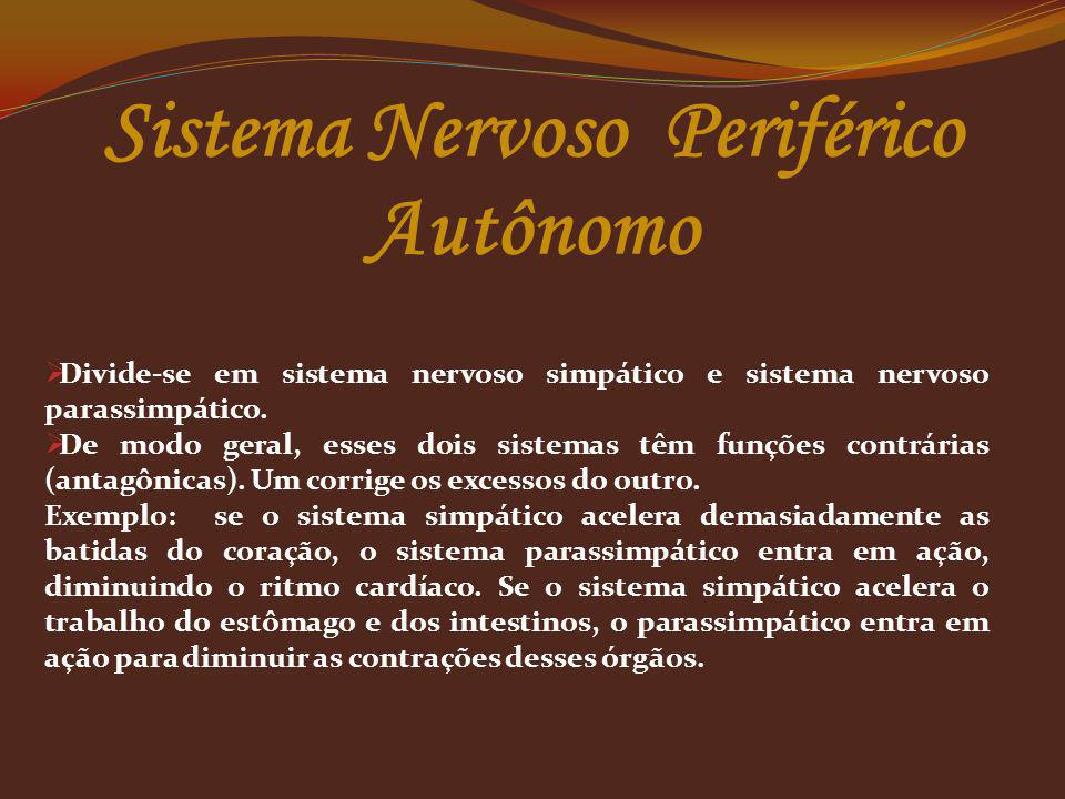 Sistema Nervoso Periférico Autônomo