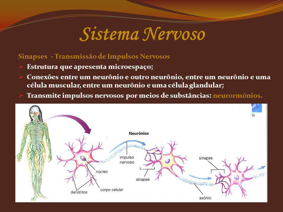 Sistema Nervoso Sinapses - Transmissão de Impulsos Nervosos