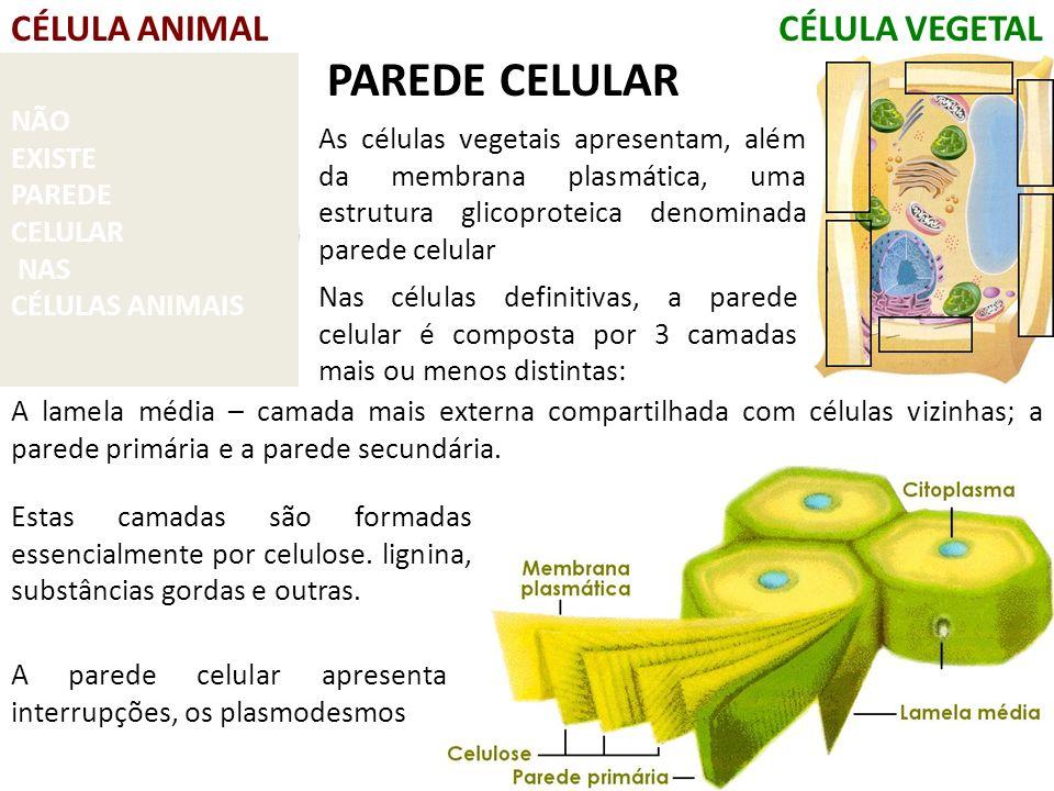 PAREDE CELULAR CÉLULA ANIMAL CÉLULA VEGETAL NÃO EXISTE PAREDE