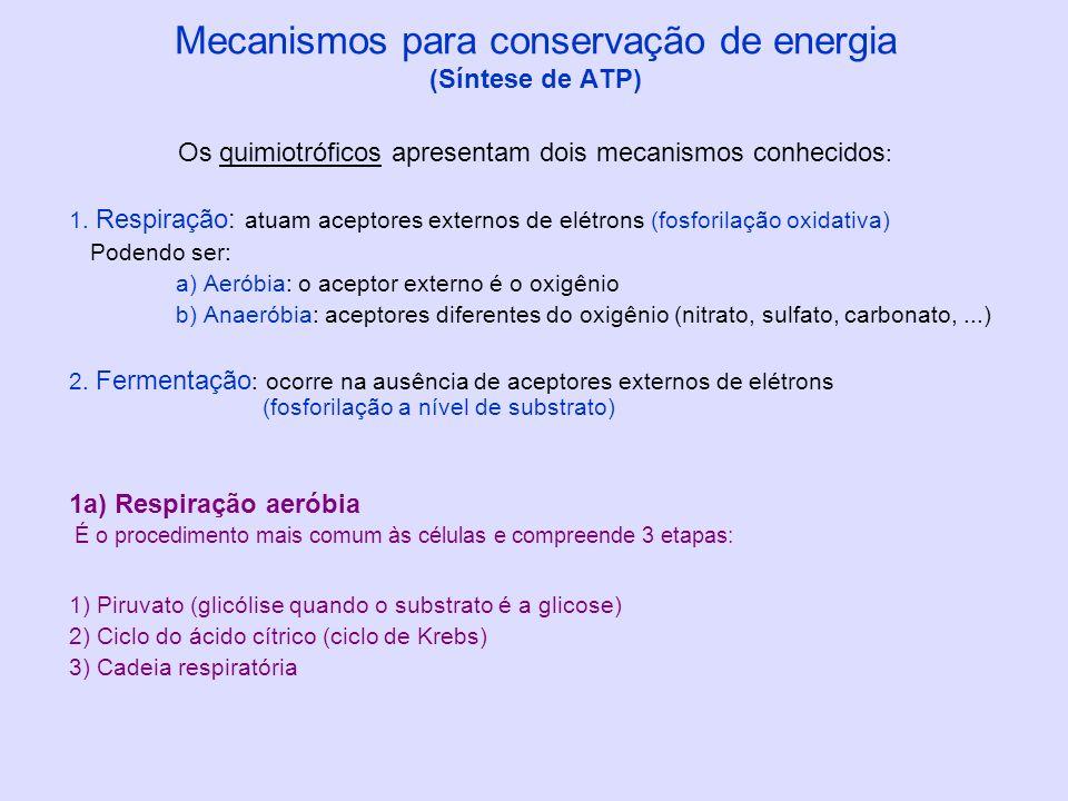 Mecanismos para conservação de energia (Síntese de ATP)