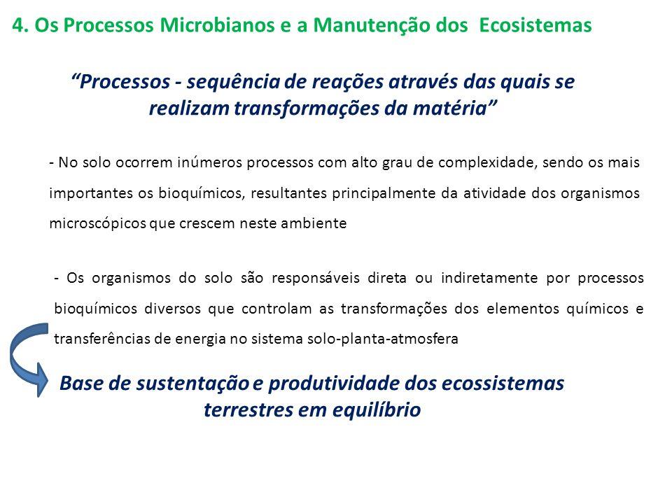 4. Os Processos Microbianos e a Manutenção dos Ecosistemas