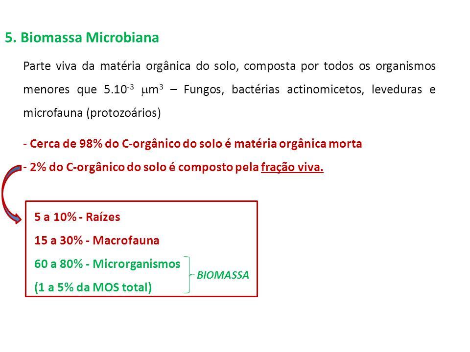5. Biomassa Microbiana