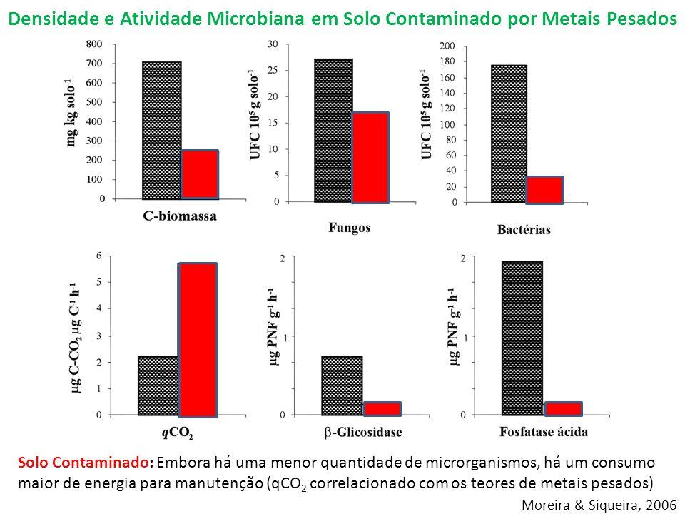 Densidade e Atividade Microbiana em Solo Contaminado por Metais Pesados