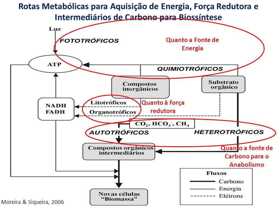 Rotas Metabólicas para Aquisição de Energia, Força Redutora e Intermediários de Carbono para Biossíntese