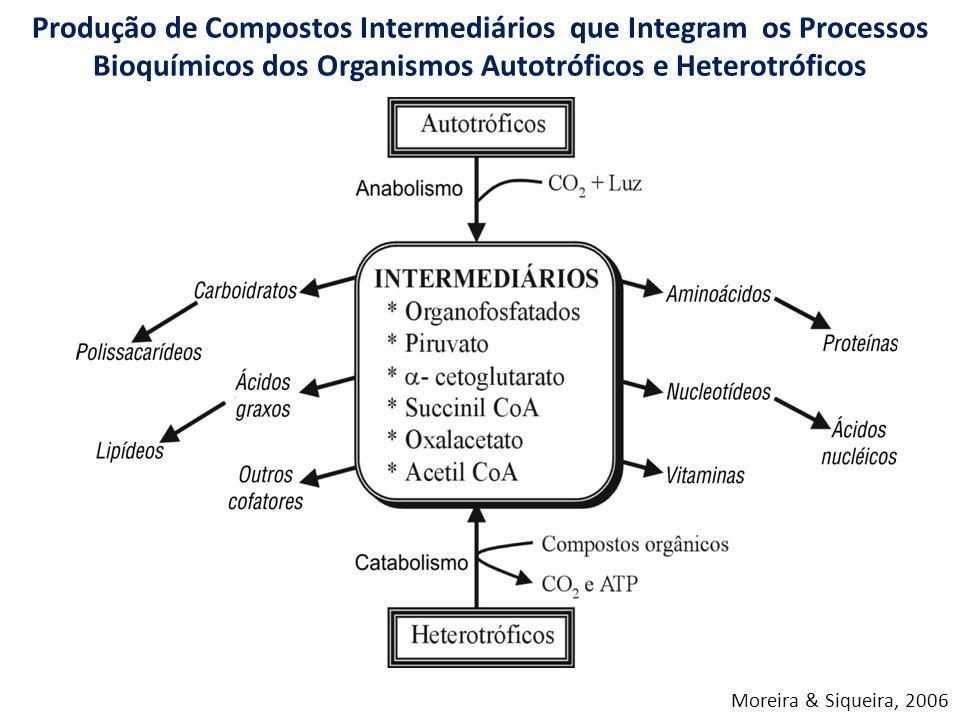 Produção de Compostos Intermediários que Integram os Processos Bioquímicos dos Organismos Autotróficos e Heterotróficos