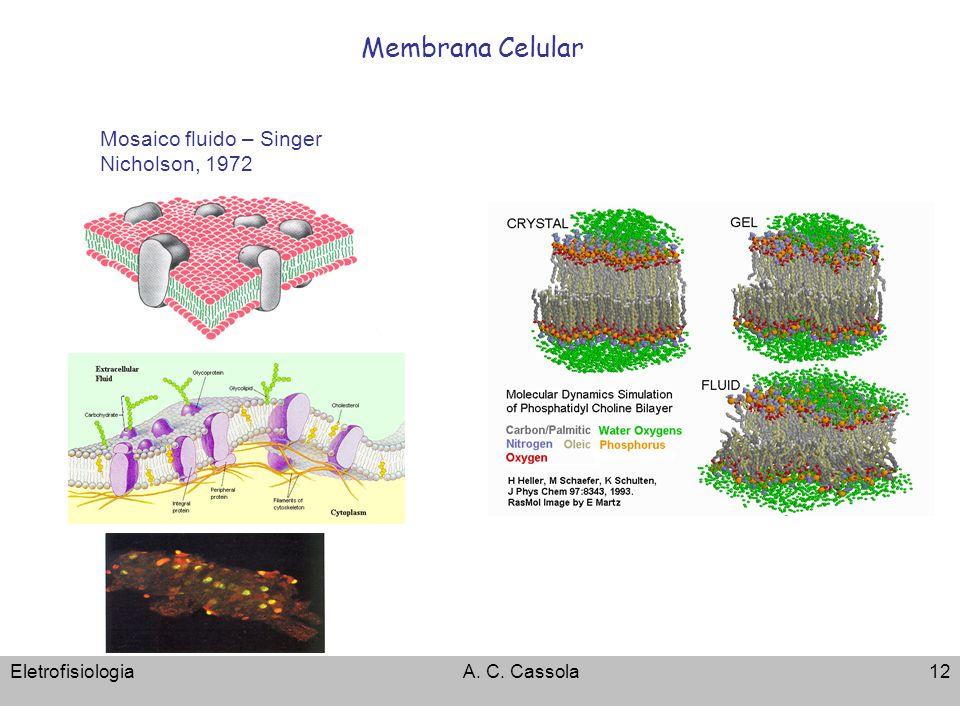 Membrana Celular Mosaico fluido – Singer Nicholson, 1972