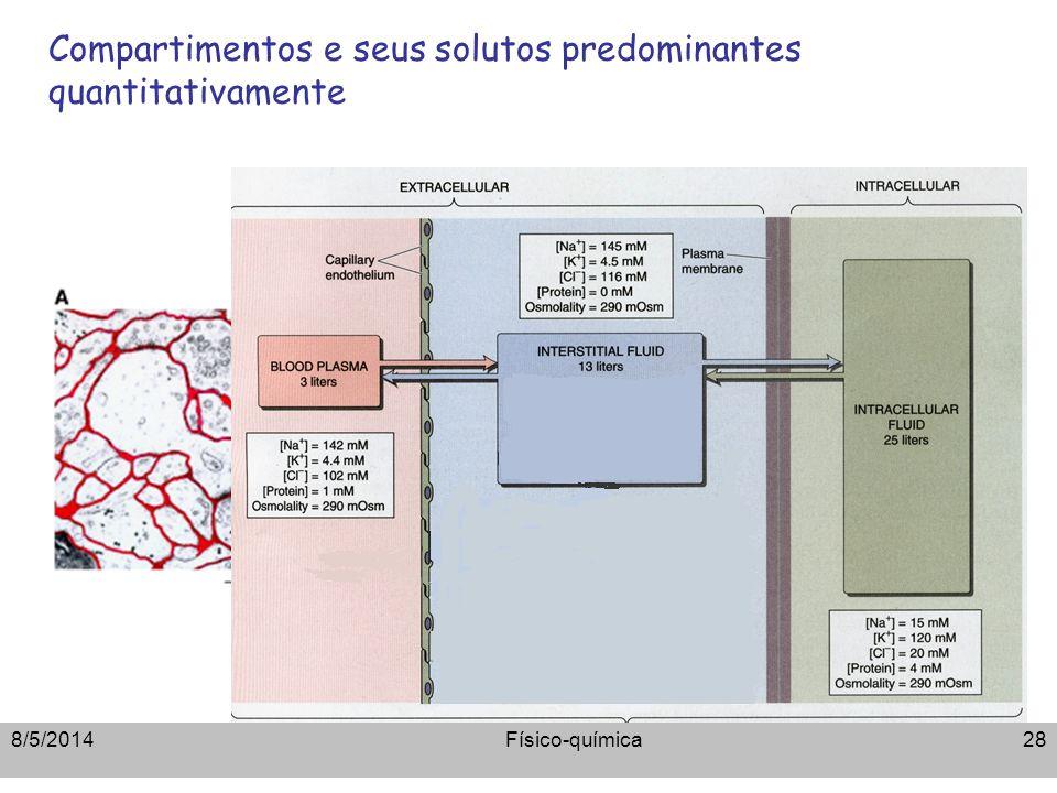 Compartimentos e seus solutos predominantes quantitativamente