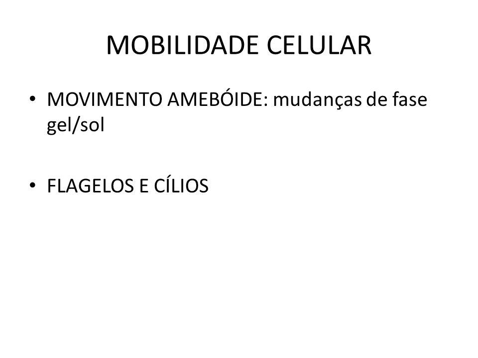 MOBILIDADE CELULAR MOVIMENTO AMEBÓIDE: mudanças de fase gel/sol