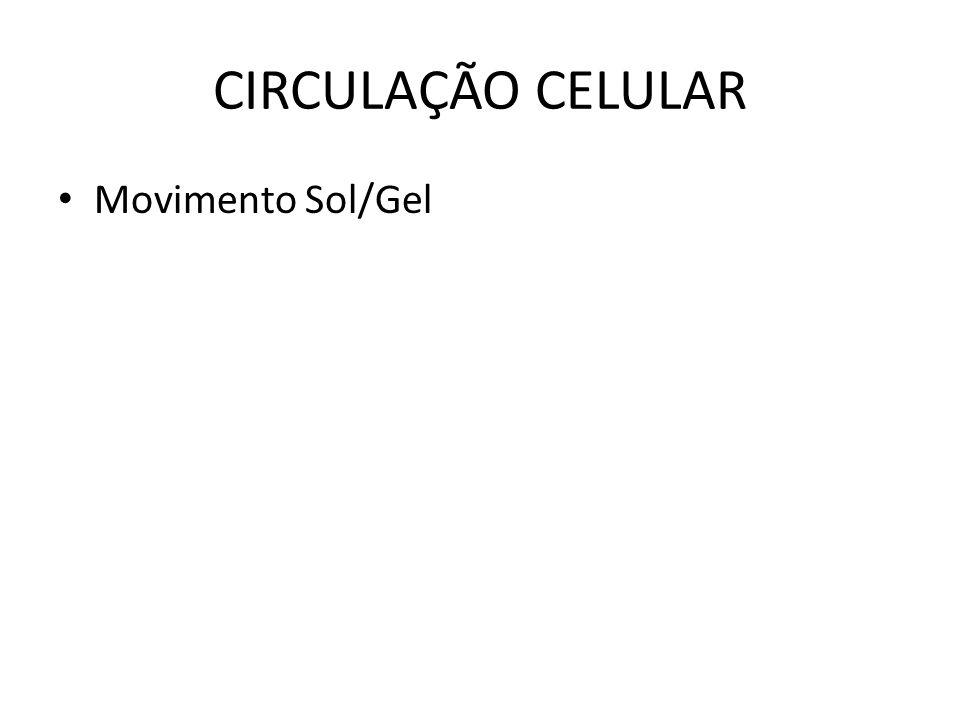 CIRCULAÇÃO CELULAR Movimento Sol/Gel