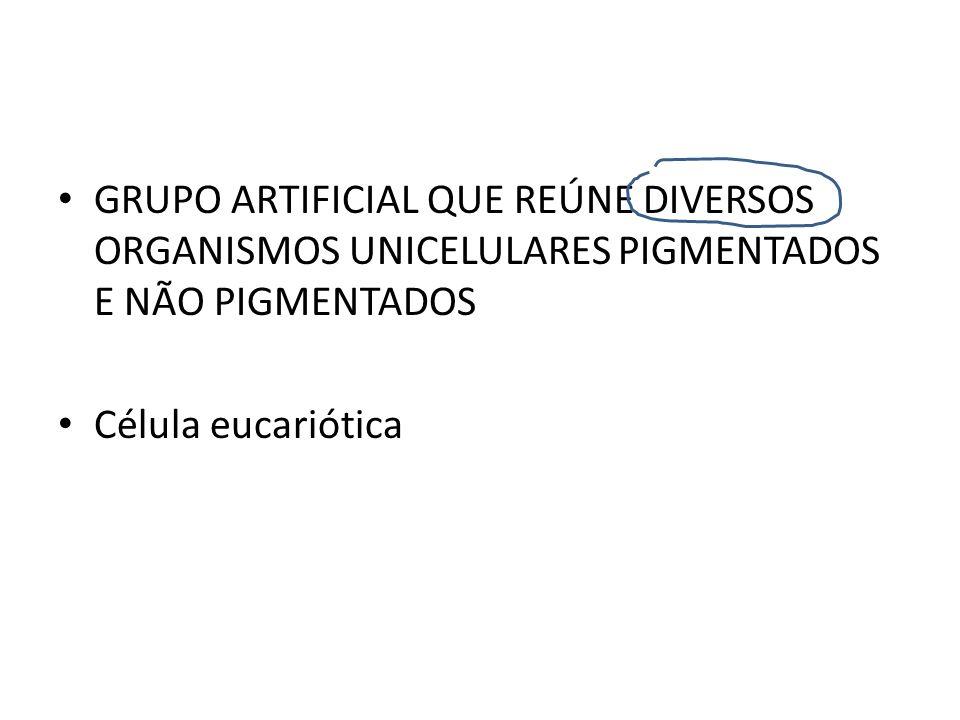 GRUPO ARTIFICIAL QUE REÚNE DIVERSOS ORGANISMOS UNICELULARES PIGMENTADOS E NÃO PIGMENTADOS