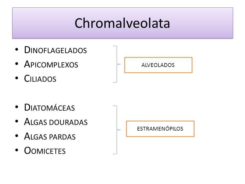 Chromalveolata DINOFLAGELADOS APICOMPLEXOS CILIADOS DIATOMÁCEAS