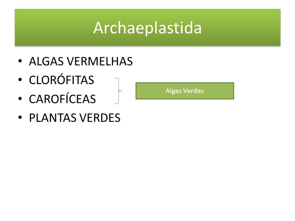 Archaeplastida ALGAS VERMELHAS CLORÓFITAS CAROFÍCEAS PLANTAS VERDES