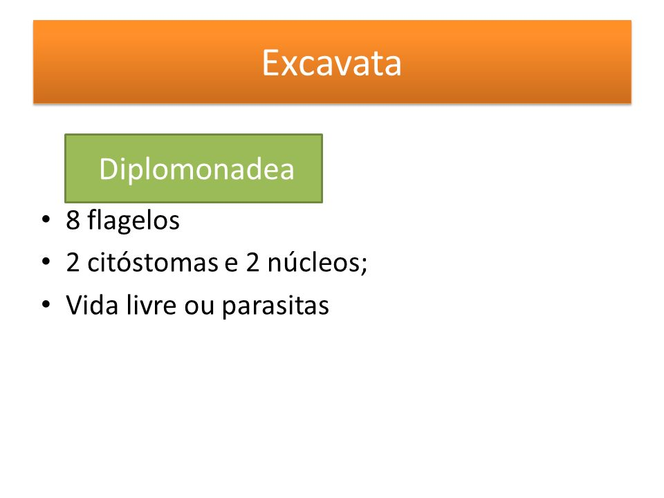 Excavata Diplomonadea 8 flagelos 2 citóstomas e 2 núcleos;