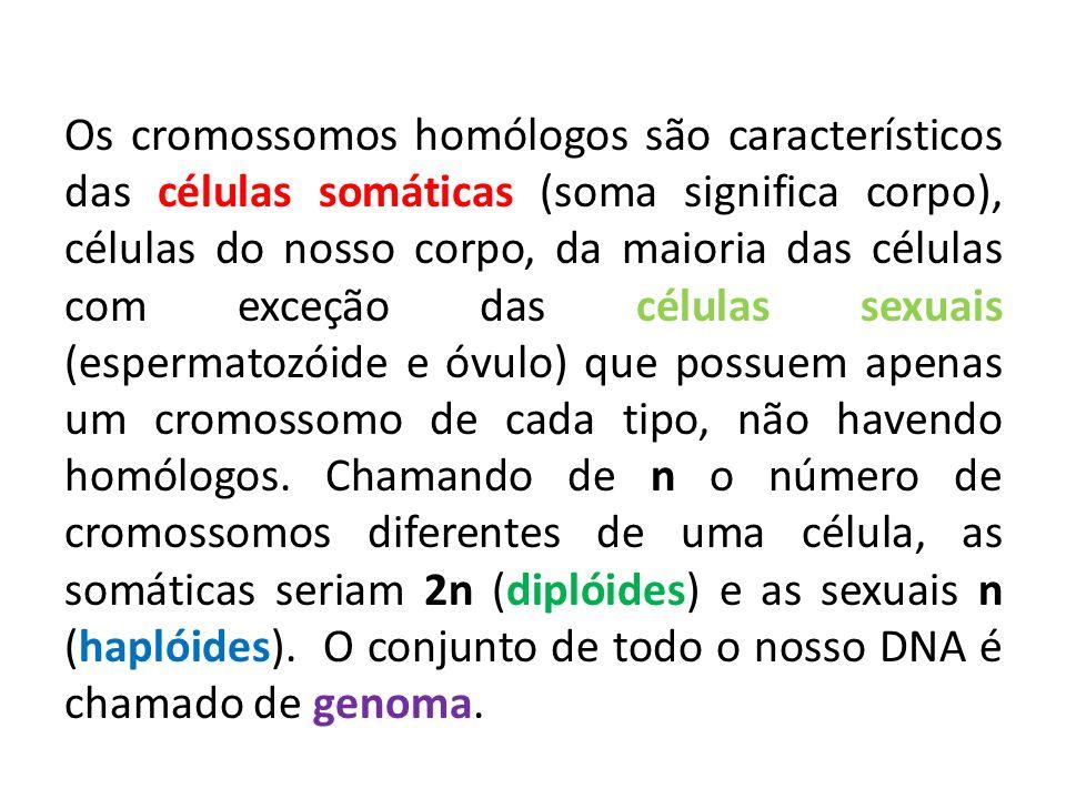 Os cromossomos homólogos são característicos das células somáticas (soma significa corpo), células do nosso corpo, da maioria das células com exceção das células sexuais (espermatozóide e óvulo) que possuem apenas um cromossomo de cada tipo, não havendo homólogos.