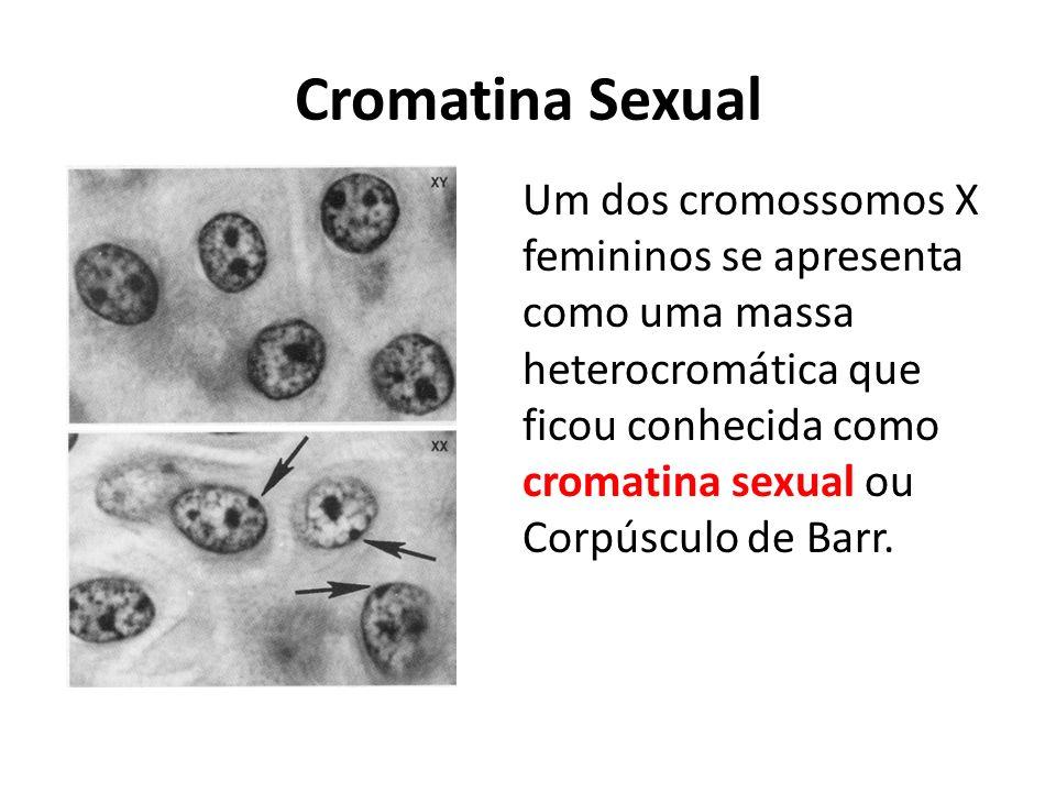 Cromatina Sexual