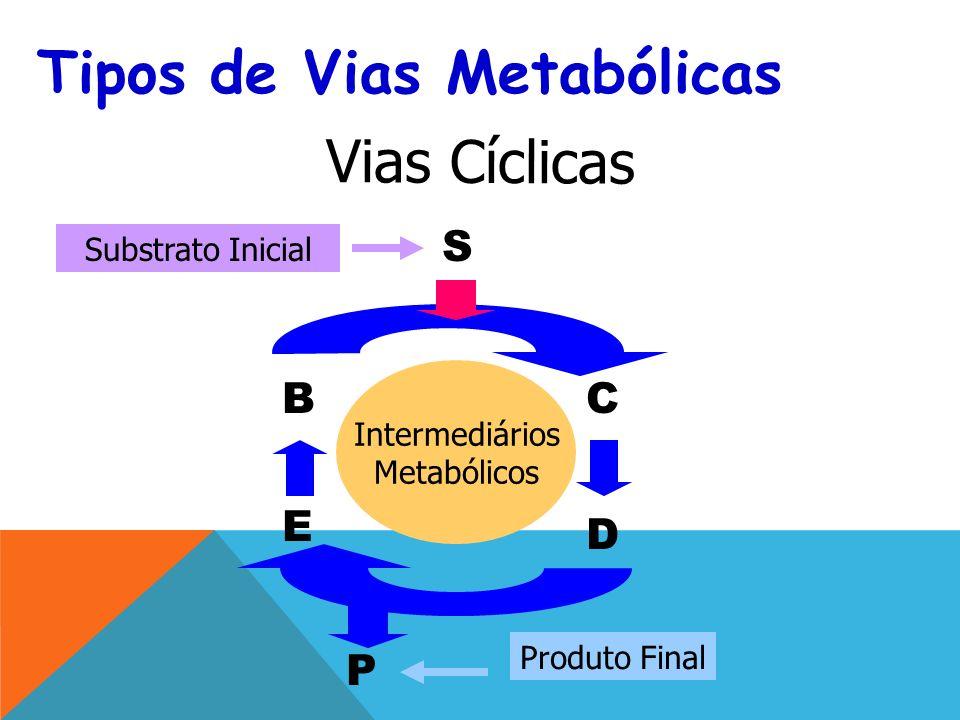 Tipos de Vias Metabólicas
