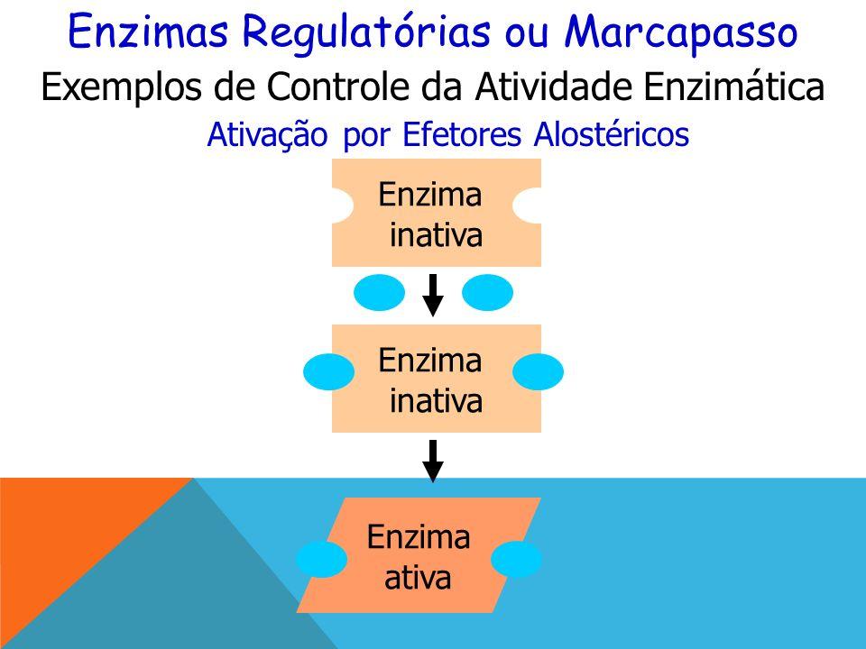 Enzimas Regulatórias ou Marcapasso