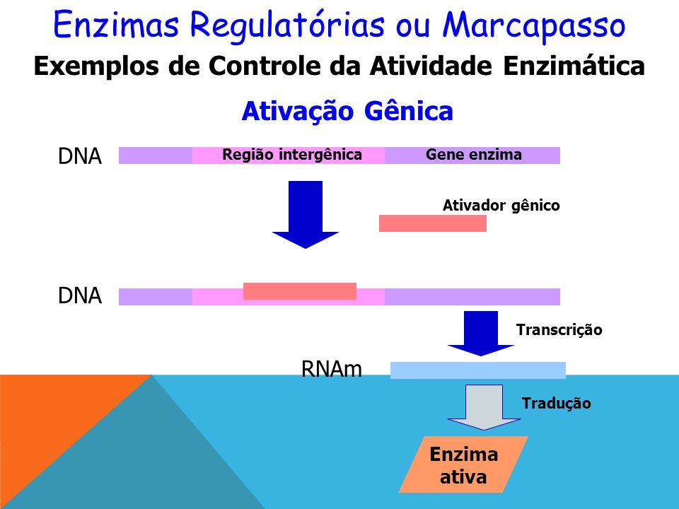 Exemplos de Controle da Atividade Enzimática