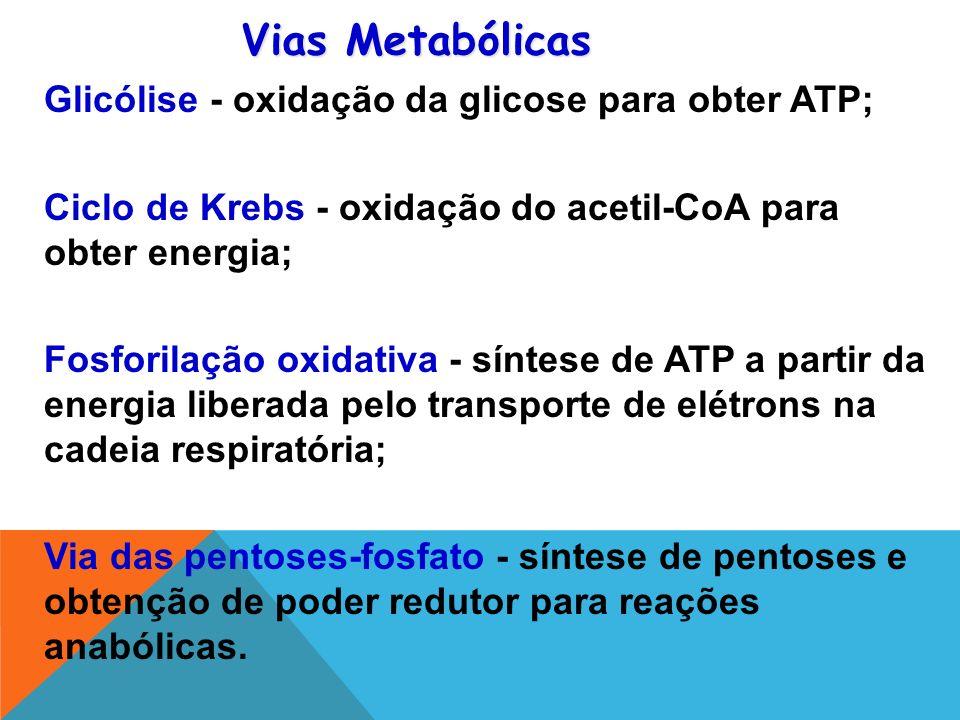 Vias Metabólicas Glicólise - oxidação da glicose para obter ATP;