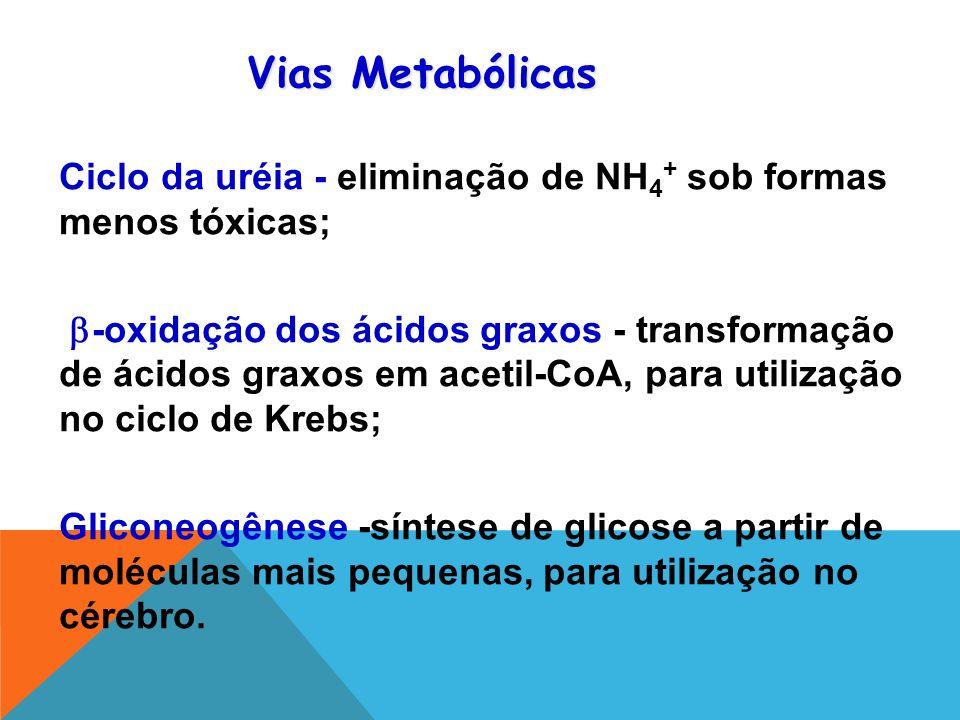 Vias Metabólicas Ciclo da uréia - eliminação de NH4+ sob formas menos tóxicas;