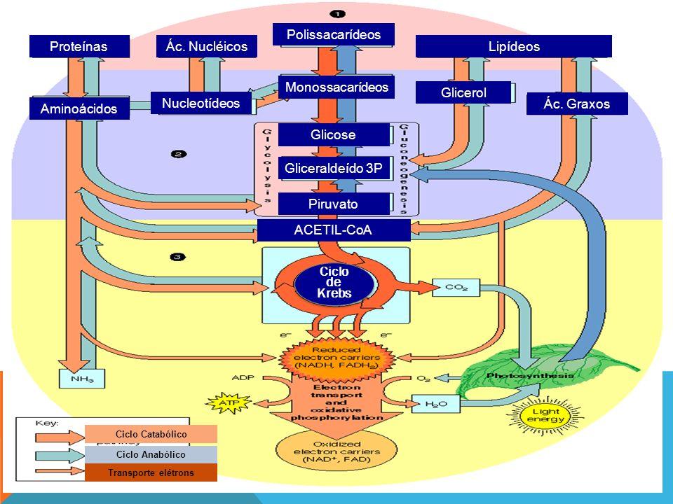 Proteínas Aminoácidos Ác. Nucléicos Nucleotídeos Polissacarídeos