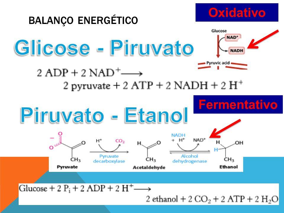 Glicose - Piruvato Piruvato - Etanol