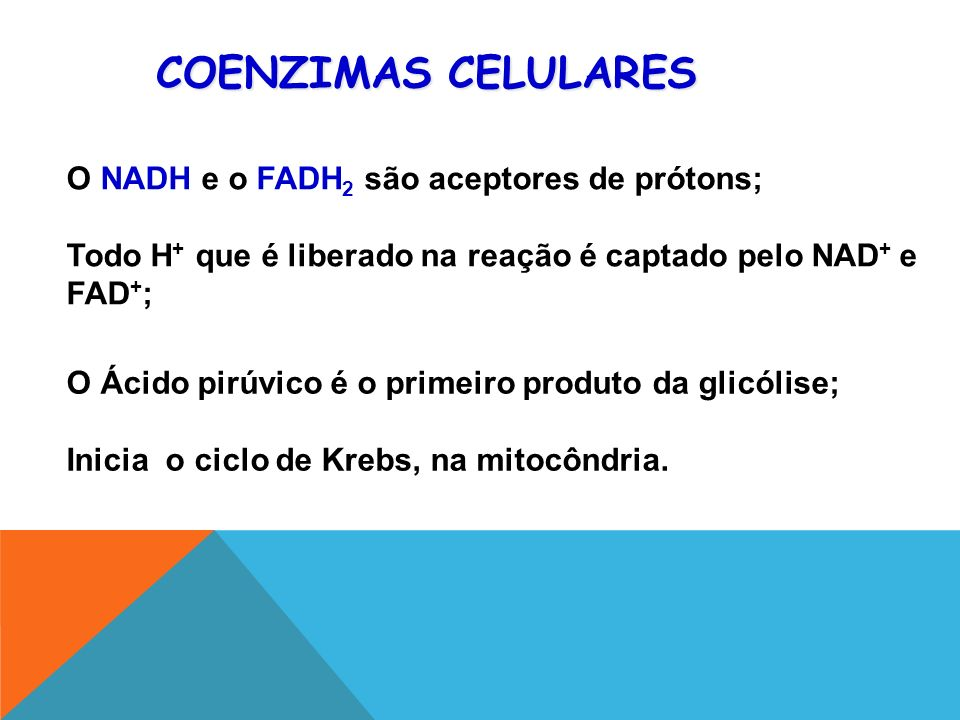 COENZIMAS CELULARES O NADH e o FADH2 são aceptores de prótons;