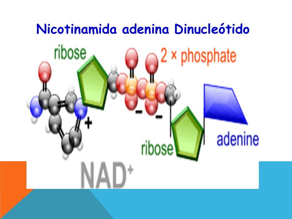 Nicotinamida adenina Dinucleótido