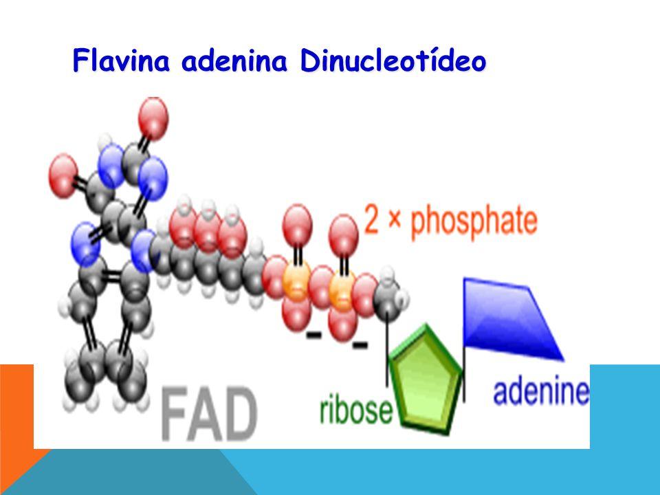 Flavina adenina Dinucleotídeo